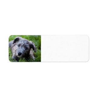 glen of imaal puppy return address label