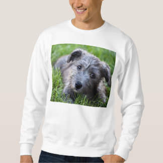 glen of imaal puppy sweatshirt