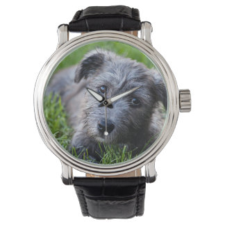 glen of imaal puppy watches