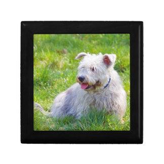 Glen of Imaal terrier dog jewelry box trinket box