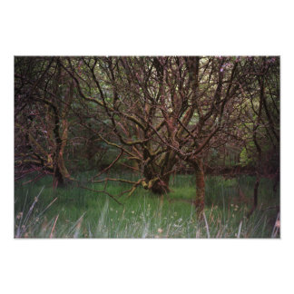 Glendalough Woods Photo