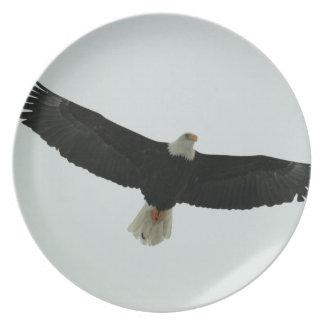 Gliding bald eagle dinner plate
