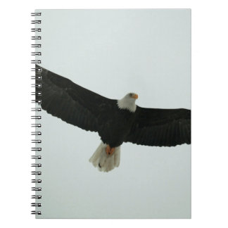 Gliding bald eagle notebooks