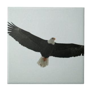 Gliding bald eagle tile