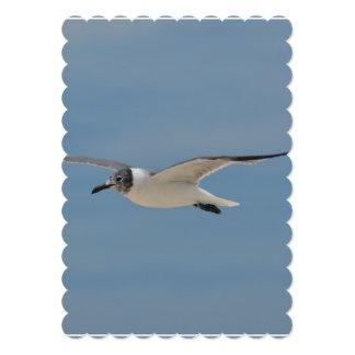 Gliding Laughing Gull Card