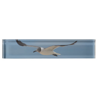 Gliding Laughing Gull Name Plates