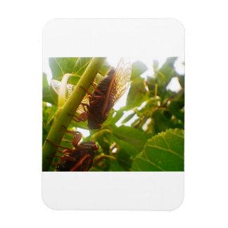 Glimpse of Nature Locust  Magnet