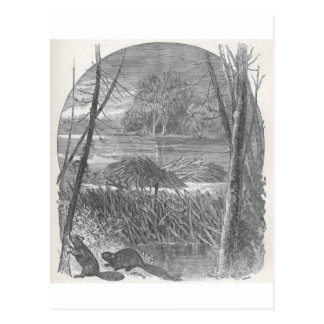 Glimpses of the Animate World - Beaver Dam Postcard
