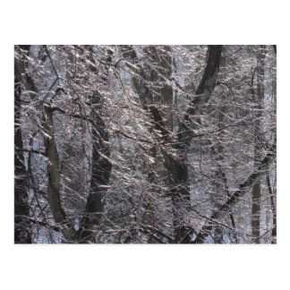 Glistening Icy Forest in Morning Light I Postcard