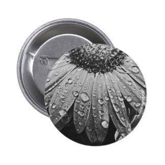 Glistening Rain Drops on Daisy Flower 2 Inch Round Button