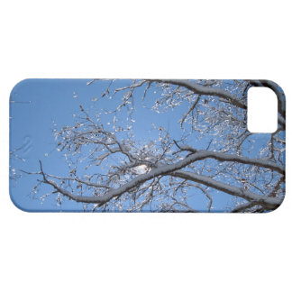 Glittering Ice and Snow Covered Trees Case For The iPhone 5