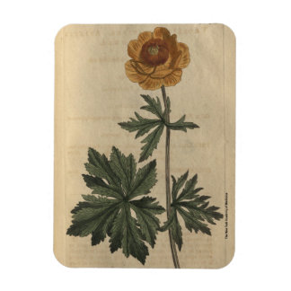 Globe Flower Rectangular Photo Magnet