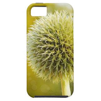 globe-thistle-599653 iPhone 5 cases