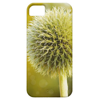 globe-thistle-599653 iPhone 5 covers