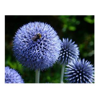 Globe Thistle Flowers Postcard