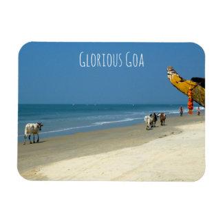 Glorious Goa - cows on the beach in South Goa Magnet