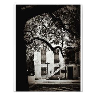 Glorious Savannah Photographic Print