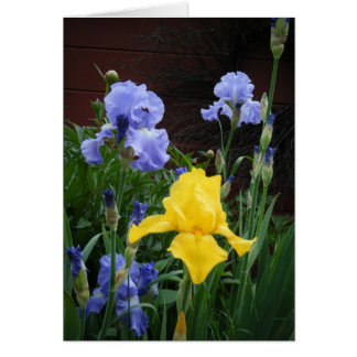"""""""Glorius Irises"""" Card"""