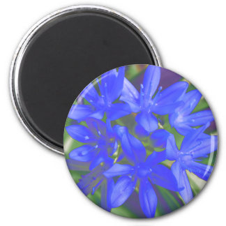 Glory Of The Snow Fluorescent Blue Magnet