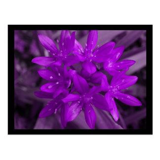 Glory Of The Snow Purple Postcard