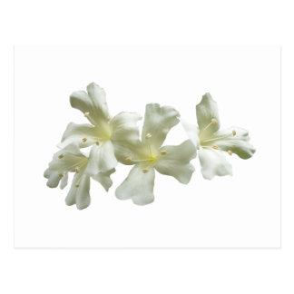 Glory Vine Flowers Postcard