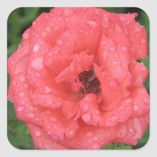 glossy rose stickers
