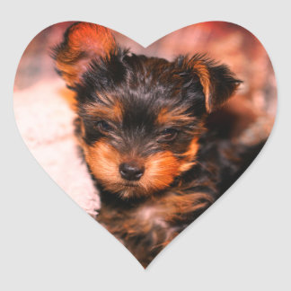 Glossy Yorke Pup Small Heart Sticker