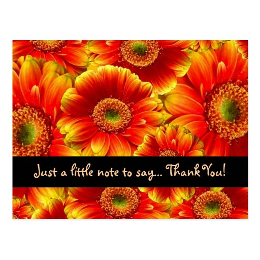 Glowing Gerbera Daisies Thank YOu Post Cards