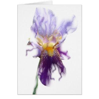 Glowing Purple Iris Card