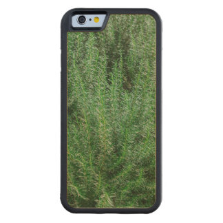 Glowing Rosemary Bushes Carved Maple iPhone 6 Bumper Case