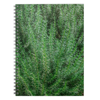 Glowing Rosemary Bushes Notebook
