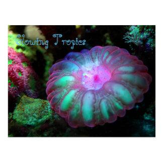 Glowing Undersea Coral Postcard