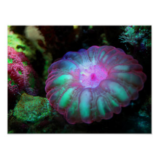 Glowing Undersea Coral Poster