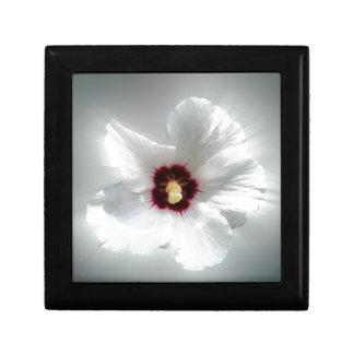 glowing white petals gift box