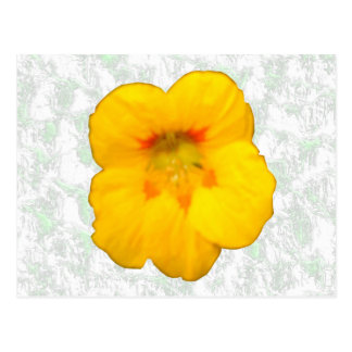 Glowing Yellow Nasturtium Flower Postcard