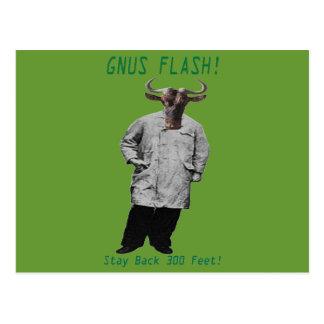 GNUS FLASH-_-Steer Clear of the Left Leaning GNUS Postcard