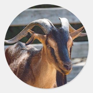 Goat 503 round sticker