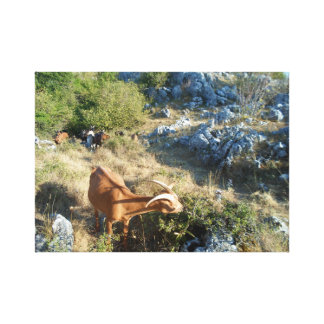 Goat and nature canvas print