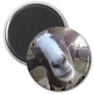 Goat Barnyard Farm Animal 2 Inch Round Magnet