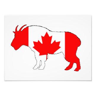 Goat Canada Photo