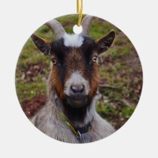 Goat close up. round ceramic ornament