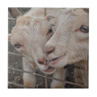 Goat Couple Ceramic Tiles