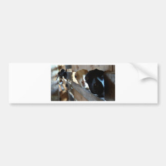 Goat Focus Bumper Sticker