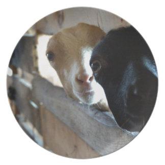 Goat Focus Plate