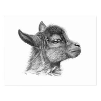 Goat G099 Baby Postcard
