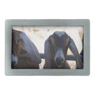Goat Gathering Belt Buckles