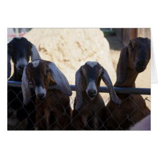 Goat Gathering Card