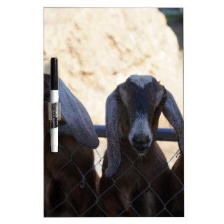 Goat Gathering Dry Erase Board