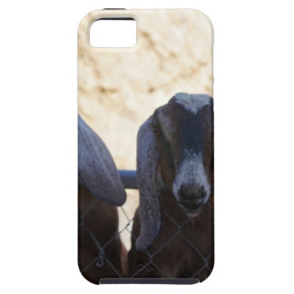 Goat Gathering iPhone 5 Case