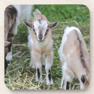 goat in the farm coasters
